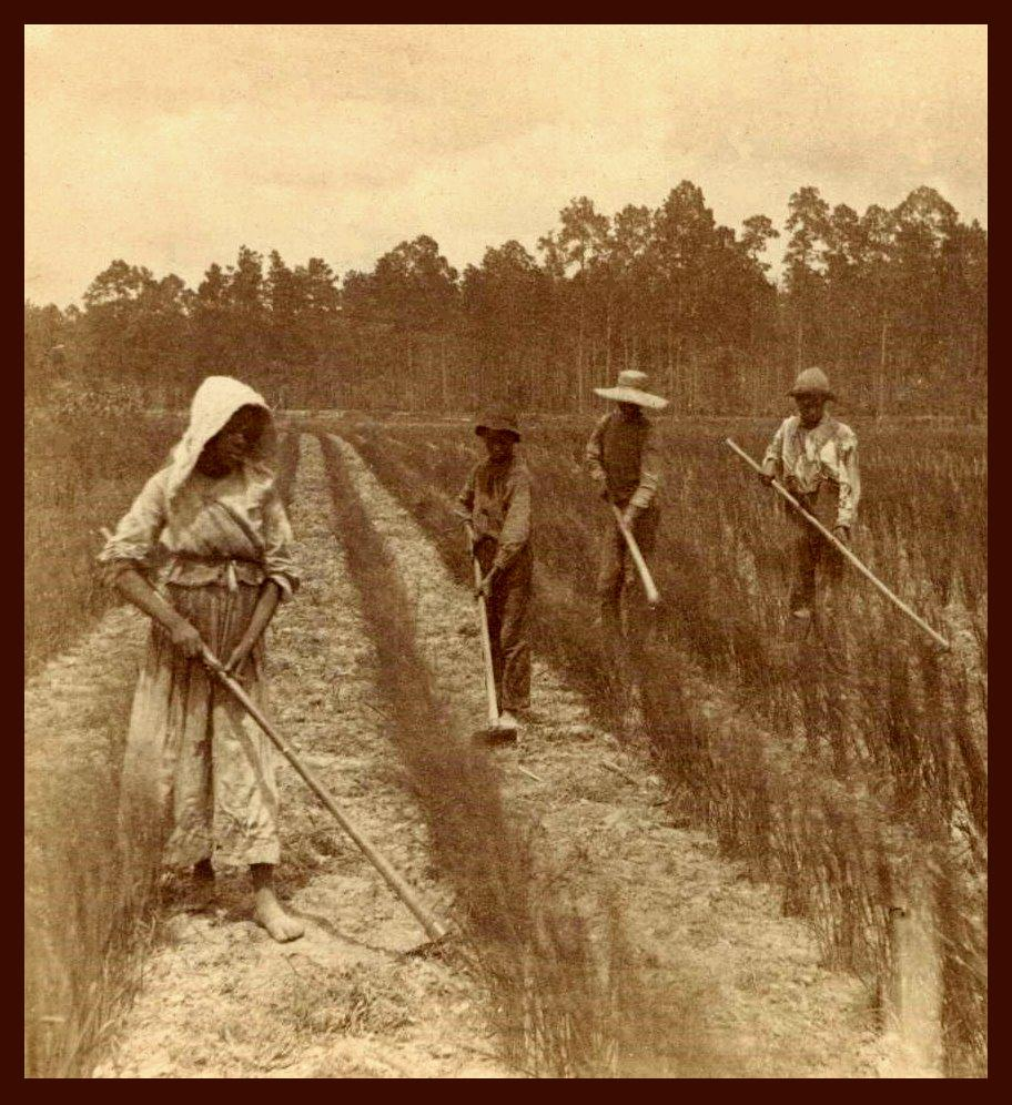 slaves in the field